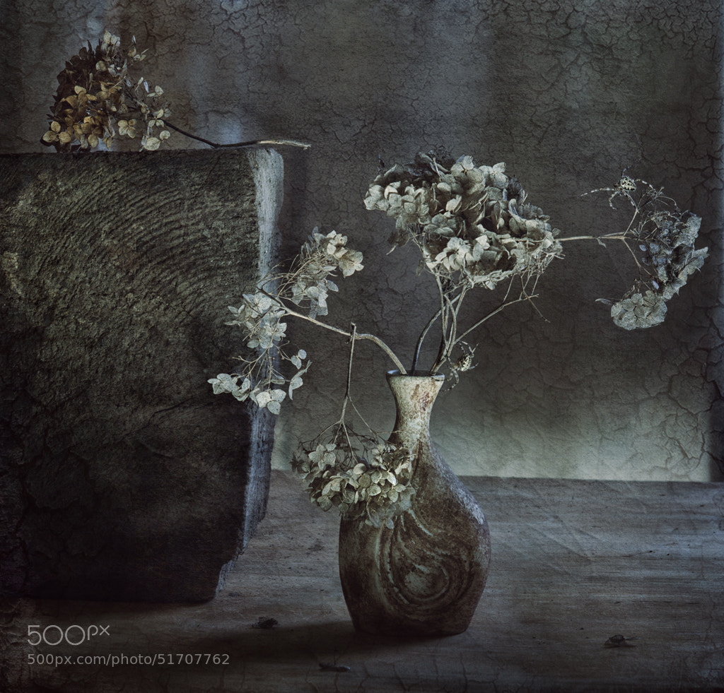 Photograph decay by Nataly Golubeva on 500px