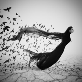 The Flight by Sophia Sudarikova (SonyaSudarikova)) on 500px.com