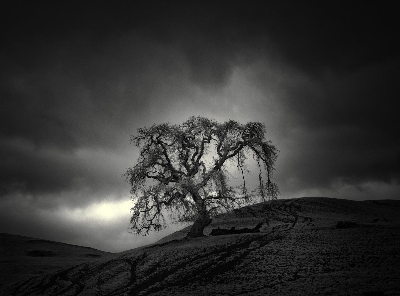 Photograph tree & hill V by Nathan Wirth on 500px