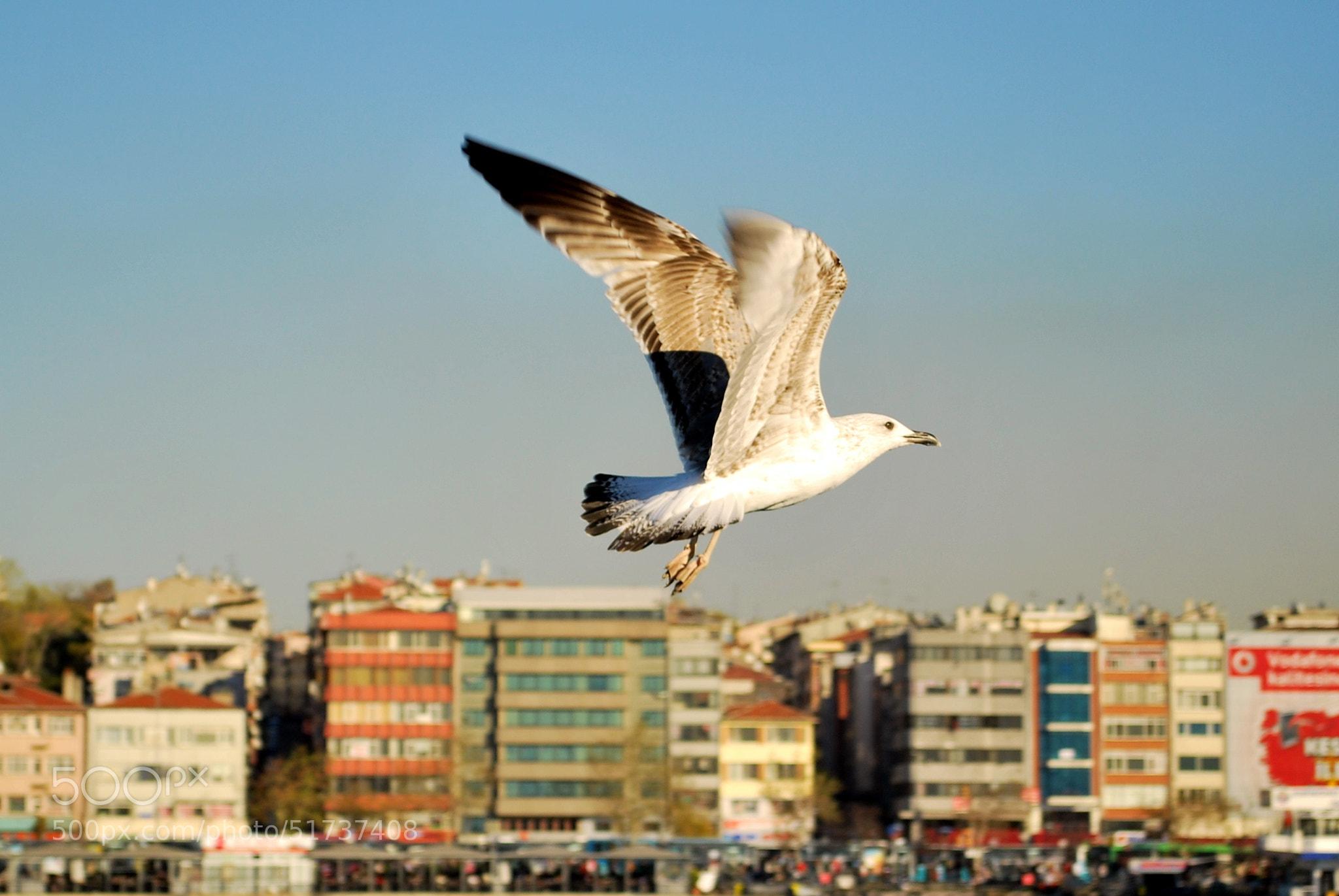 Photograph Seagull by Tolga Durgun on 500px