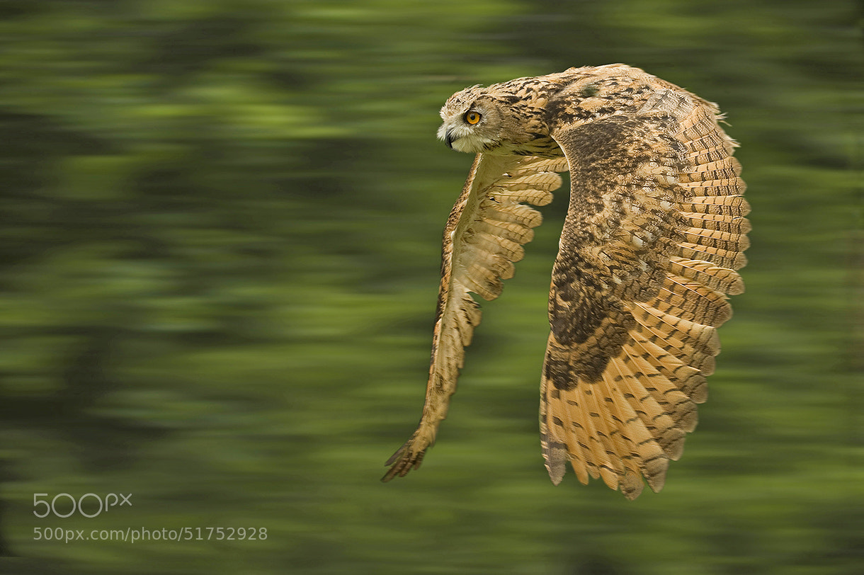 Photograph Eagle Owl by Ronald Coulter on 500px