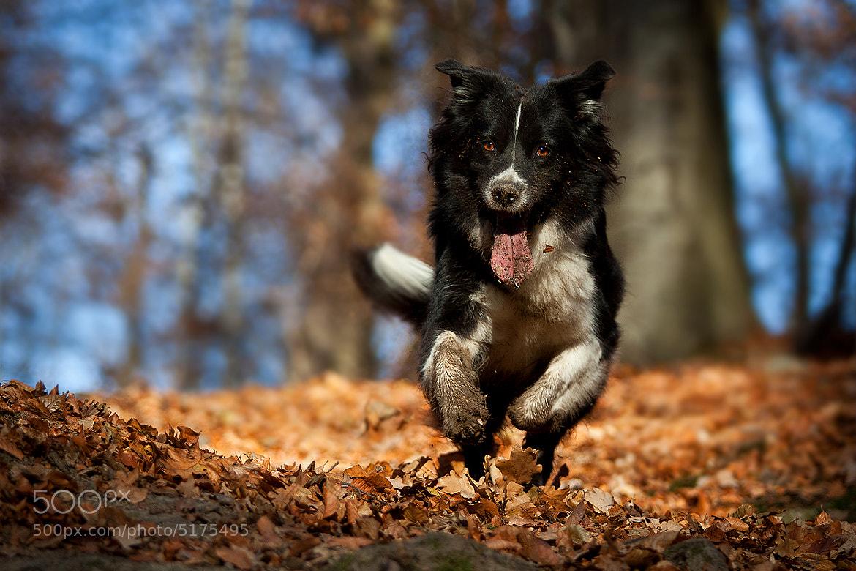 Photograph dog days by Mathias Ahrens on 500px