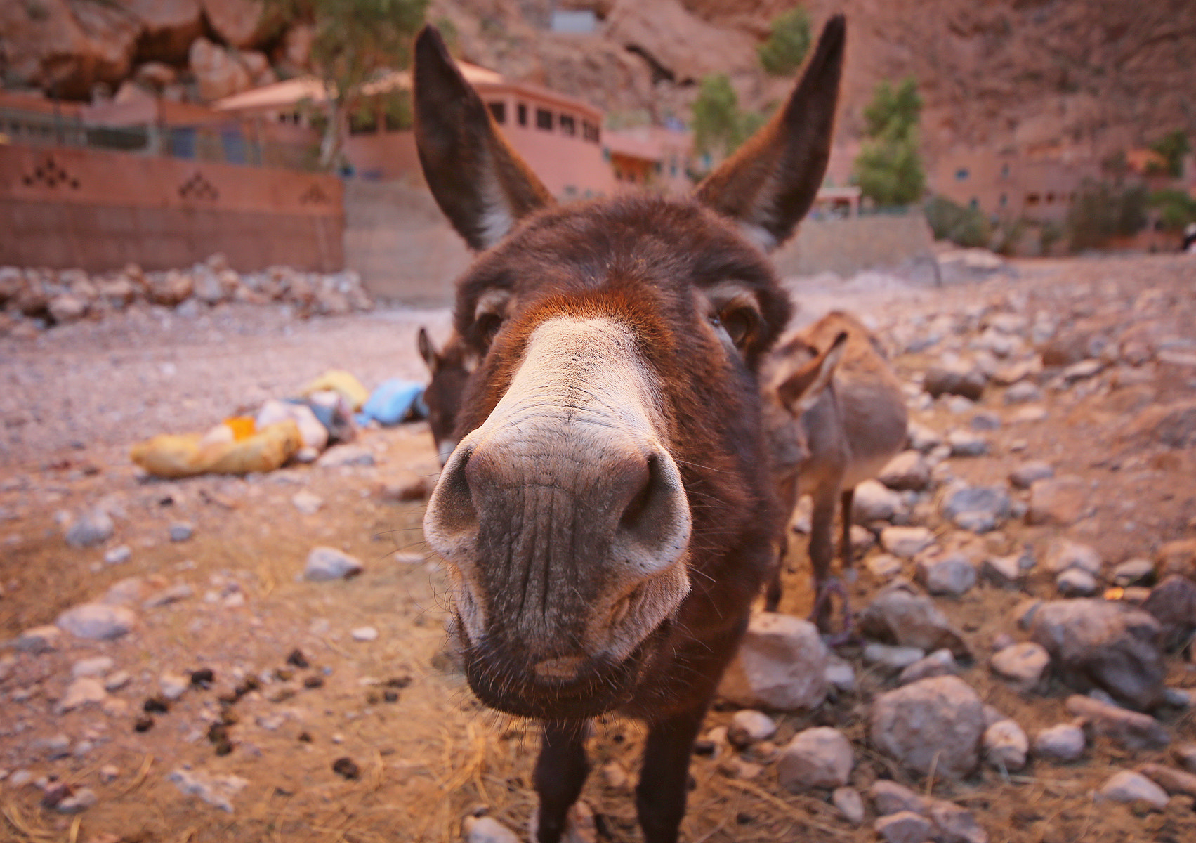 Photograph Brave donkey by Andy Beer on 500px