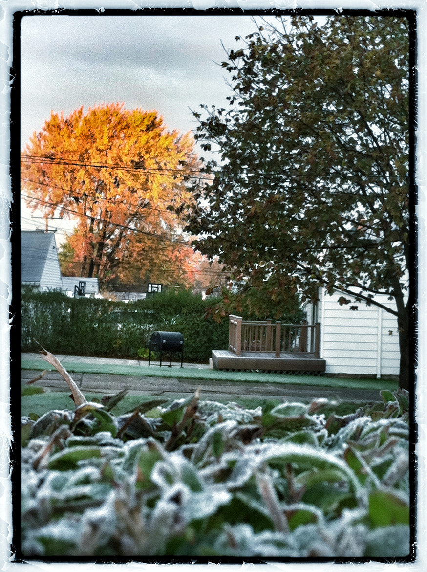Photograph 1st Frost  by J Meiring Borcherds on 500px