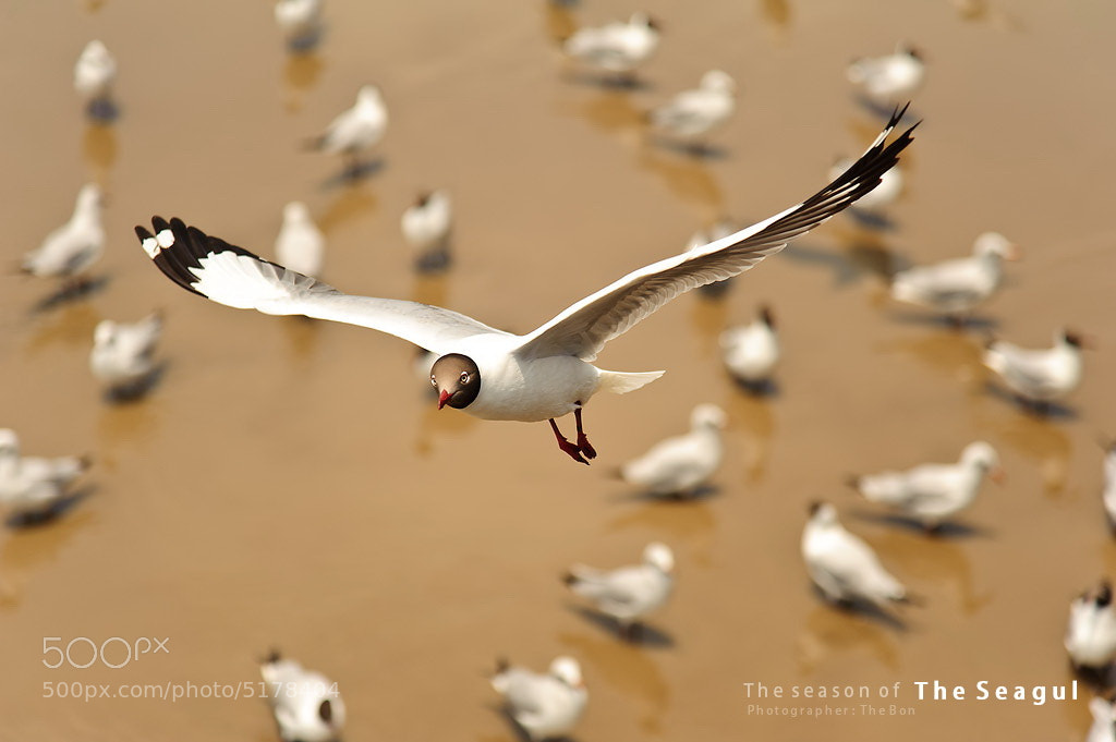 Photograph Seagul by JAKKRIT IMLIMTHAN on 500px