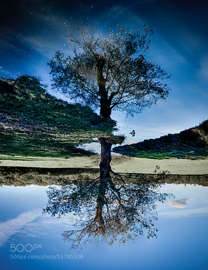 5-shot HDR of a tree and its reflection...... by day. Location: Salford, Greater Manchester.