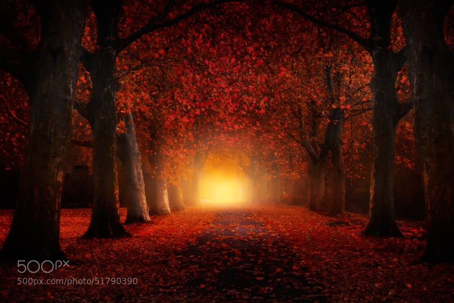 Photograph Autumn feeling by Iván Maigua on 500px