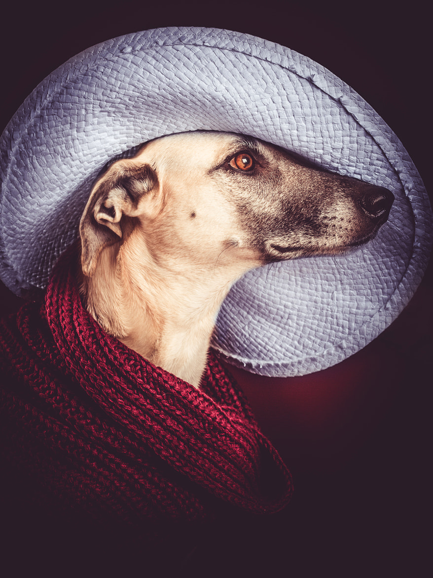 Photograph Artist by Elke Vogelsang on 500px