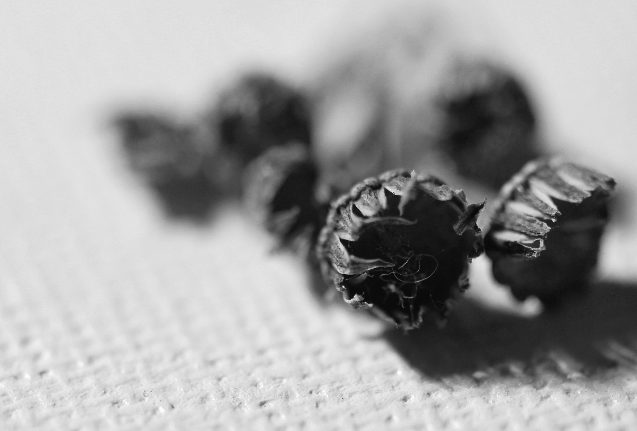 Photograph Peppercorns Too? by Silvia Poldaru on 500px