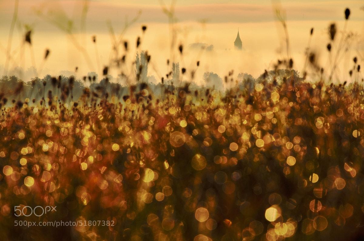 Photograph Golden Morning by Peter Kováč on 500px