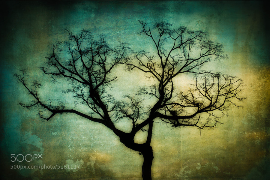 Tree Silhouette by carlos restrepo (carlosrestrepo)) on 500px.com