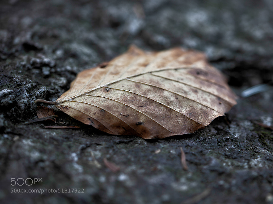 Death leaf by Samuele Silva on 500px.com