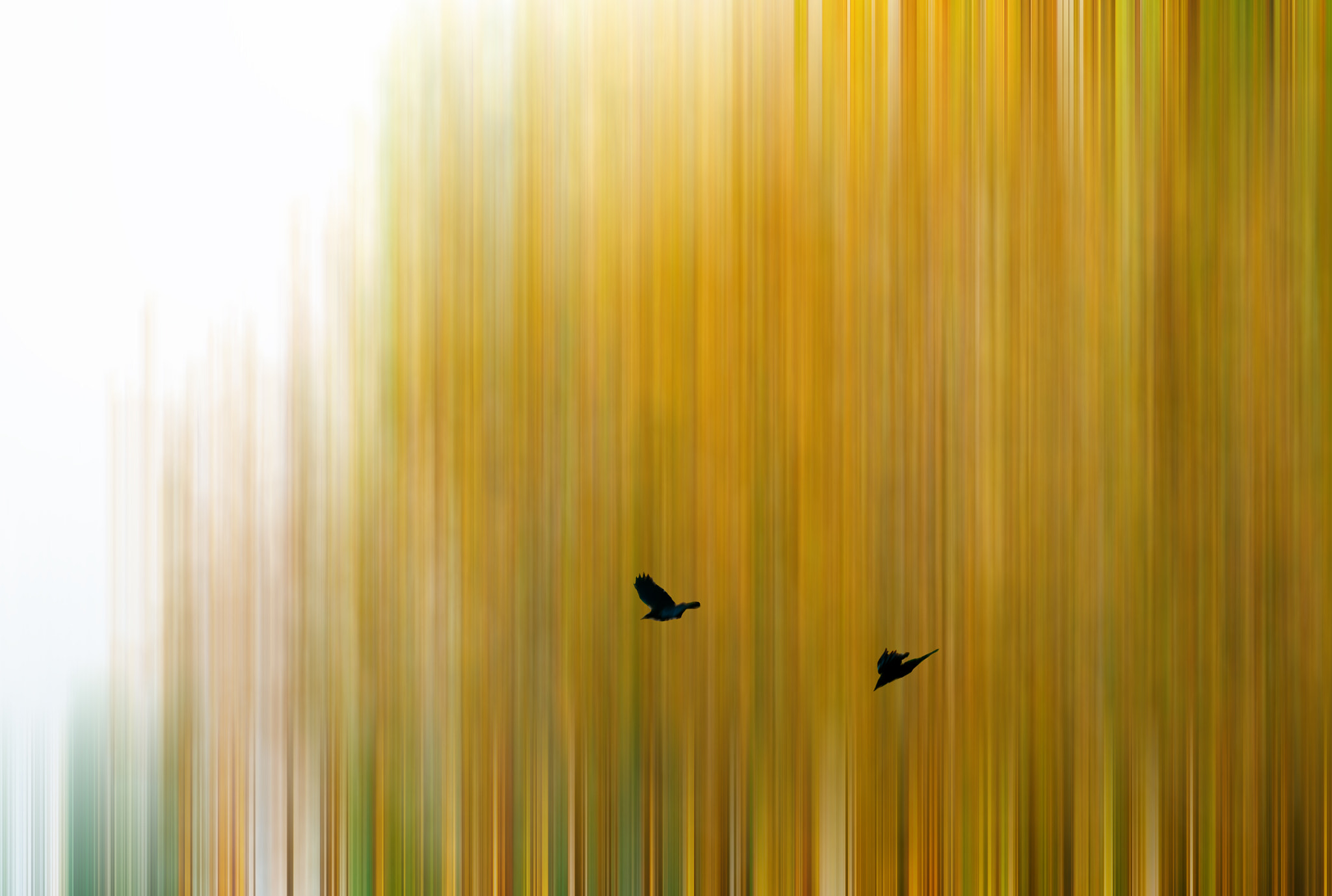 Photograph Fall Ravens by Pistol Wish ™ on 500px