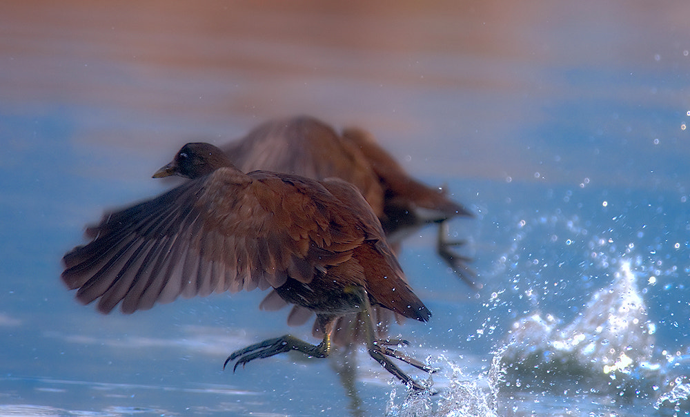 Photograph In a hurry by Leonardo Fava on 500px