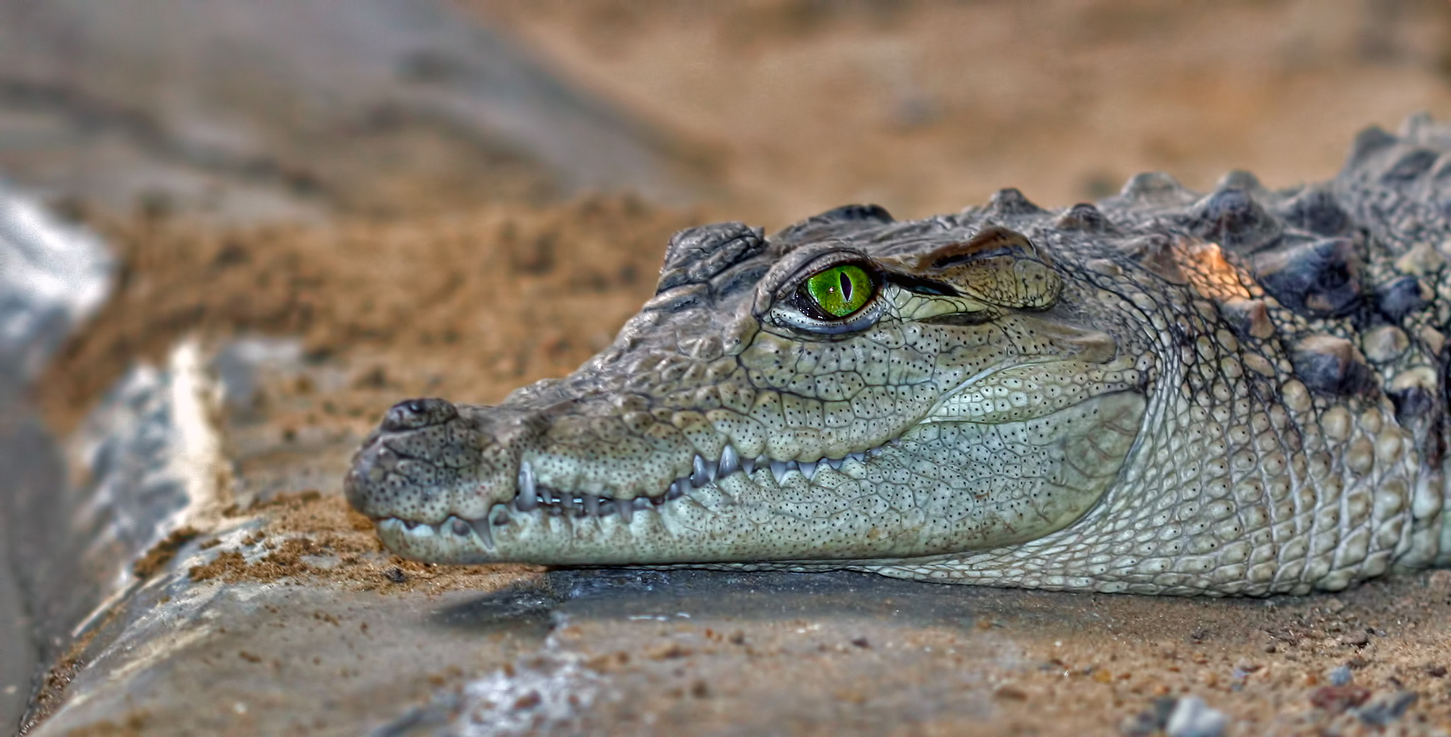 Photograph Croc by Jeremy Christian on 500px