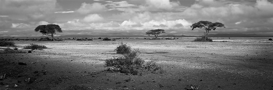 Photograph Acacia Trees by Dean Tatooles on 500px