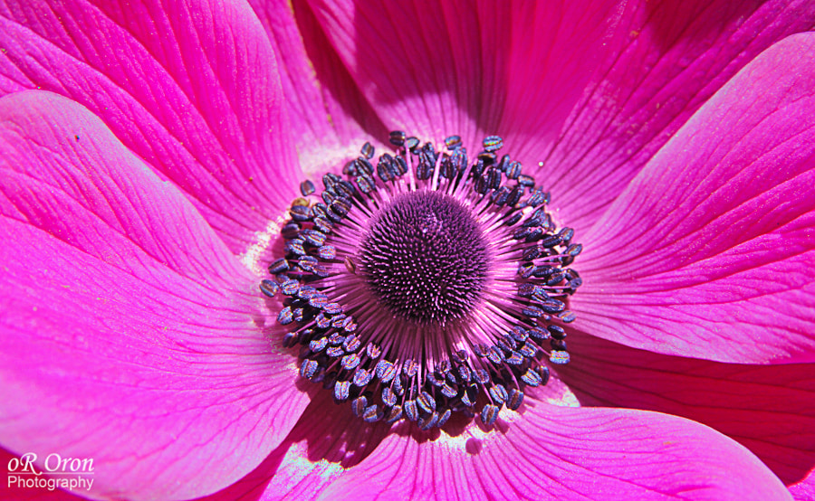 Photograph Pink me by Or Oron on 500px