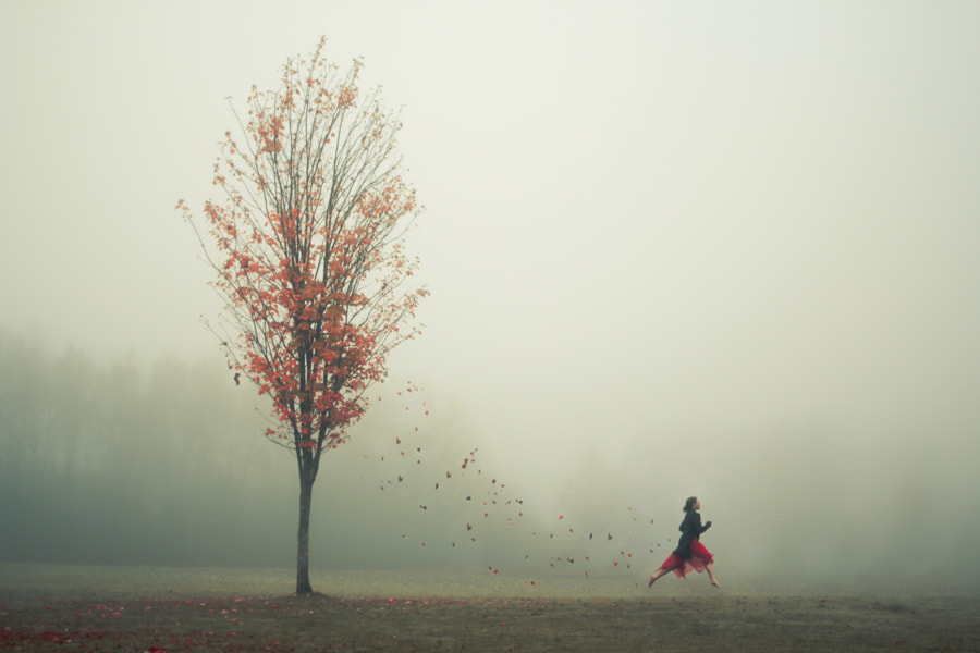 Photograph The Leaf Thief by Lizzy Gadd on 500px