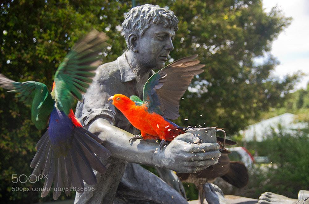 Photograph King Parrots by Chris Jones on 500px