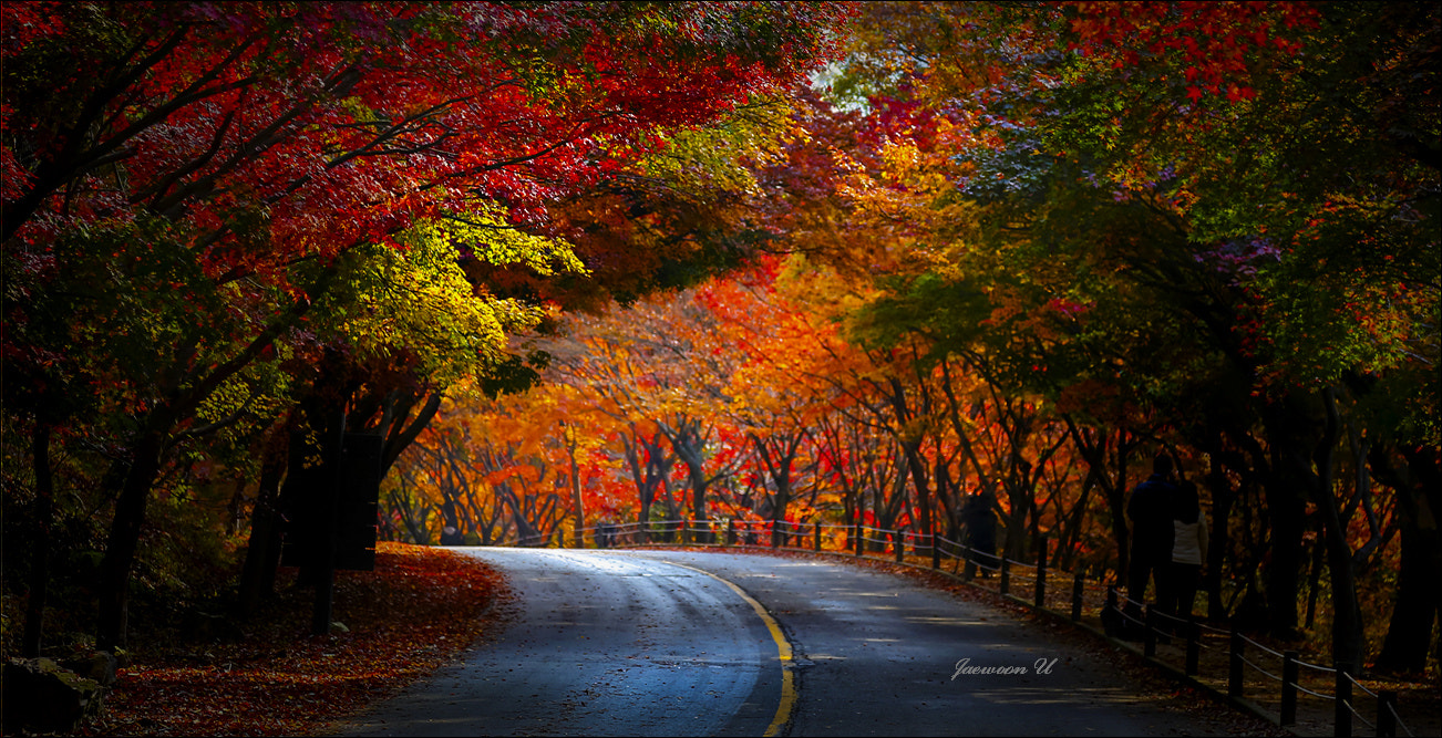 Photograph Autumn Road by Jaewoon U on 500px