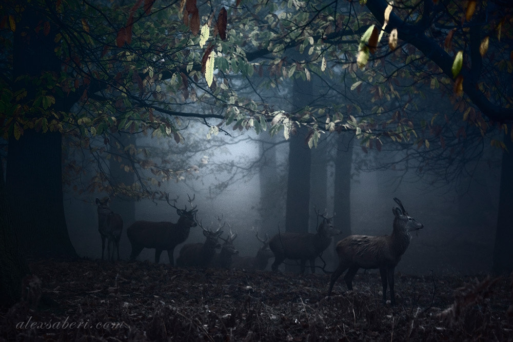 Photograph Call of the Dark by alex saberi on 500px