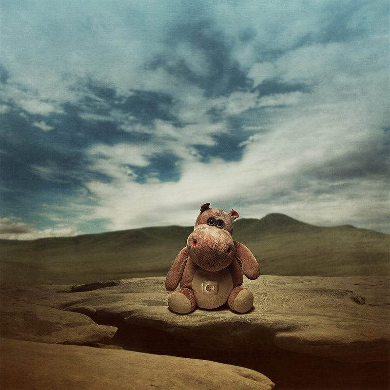 Photograph Mr hippo by Tomasz  on 500px