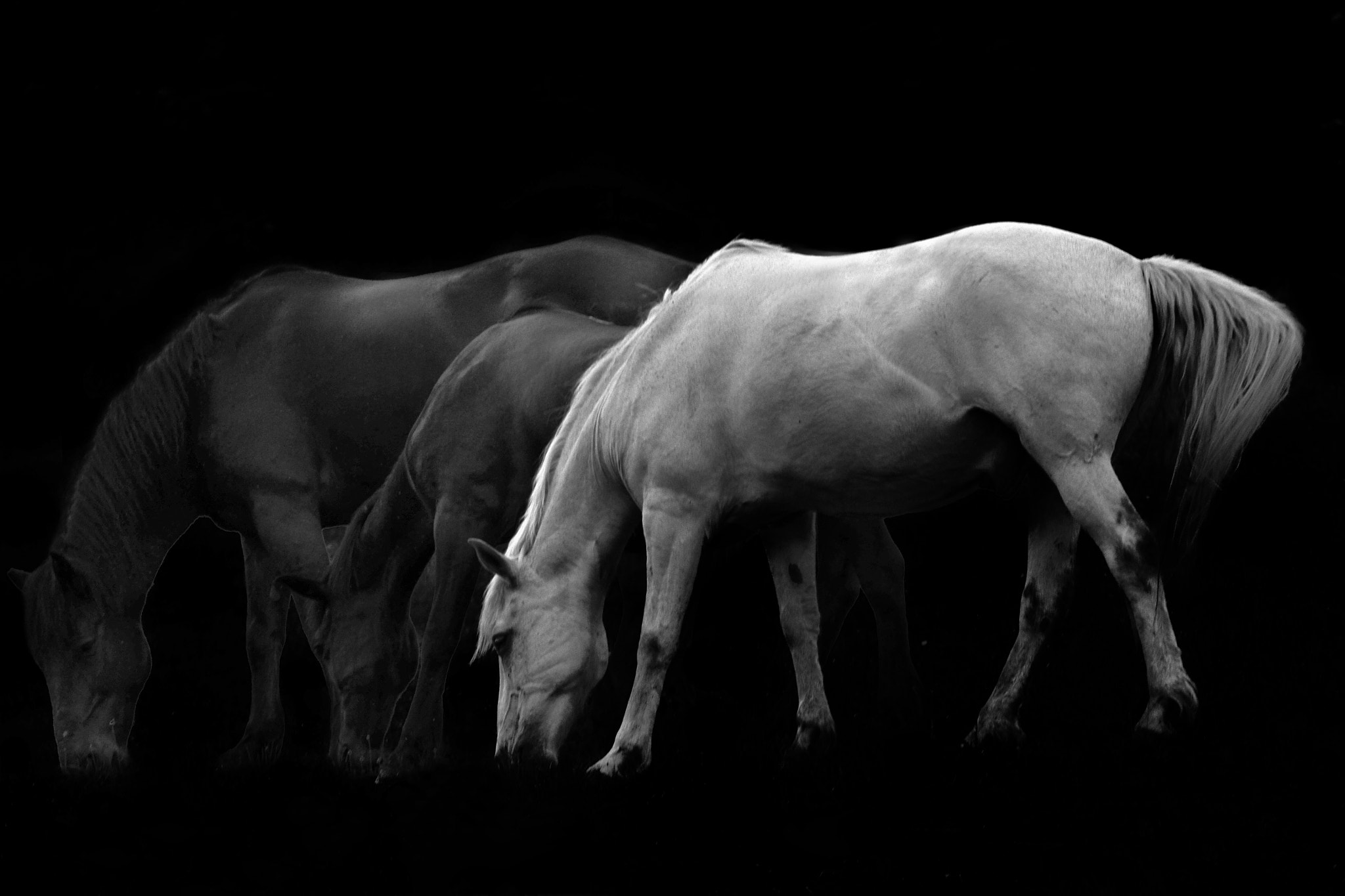 Photograph Ghostly Horses... by Ionescu Dragos on 500px