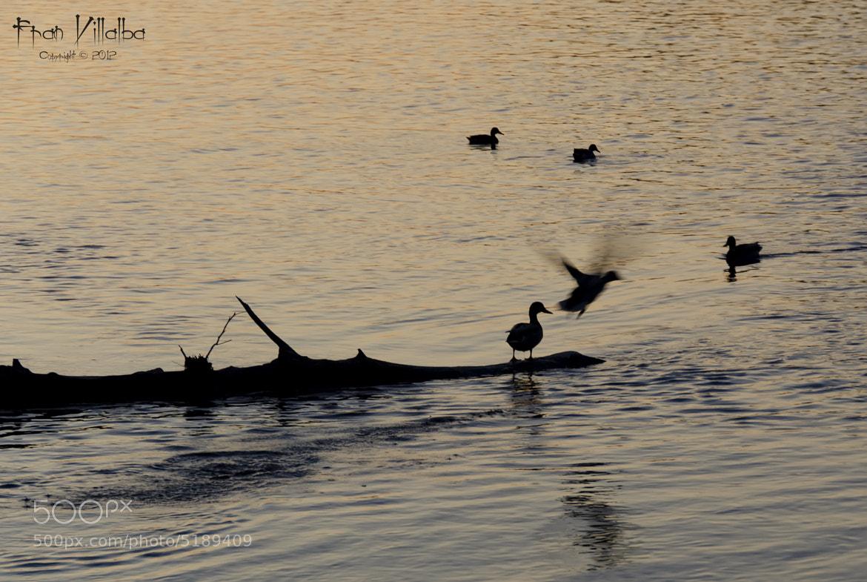 Photograph Disfrutando del Duero by Fran Villalba on 500px