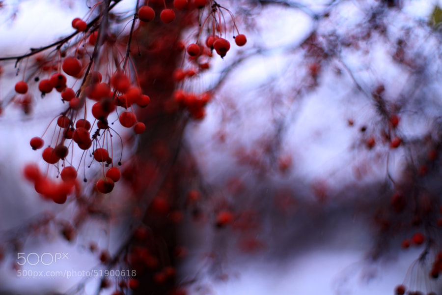 Crab Apple Tree in November (2) by Jeff Carter on 500px.com