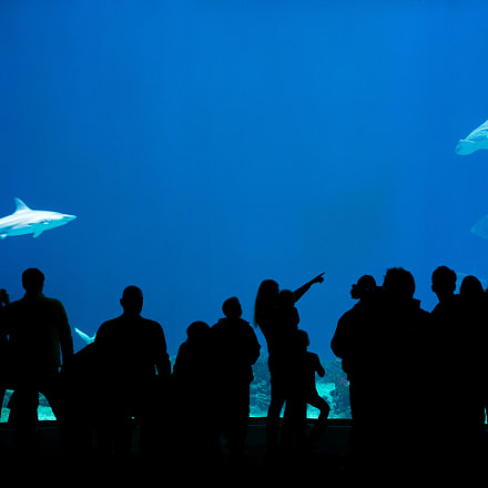 Look a shark,