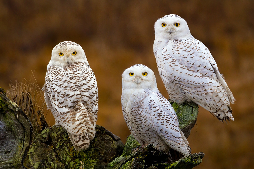 Photograph The Trilogy by Stephen Oachs on 500px