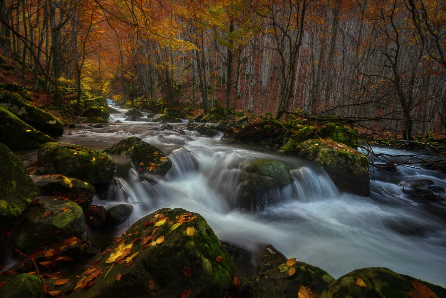 Photograph Stream in autumn by Enrico Fossati on 500px