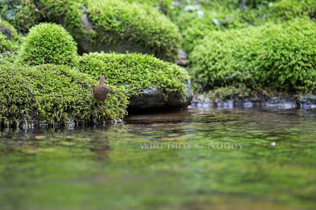 Photograph Reflections of Green by Nobby  on 500px
