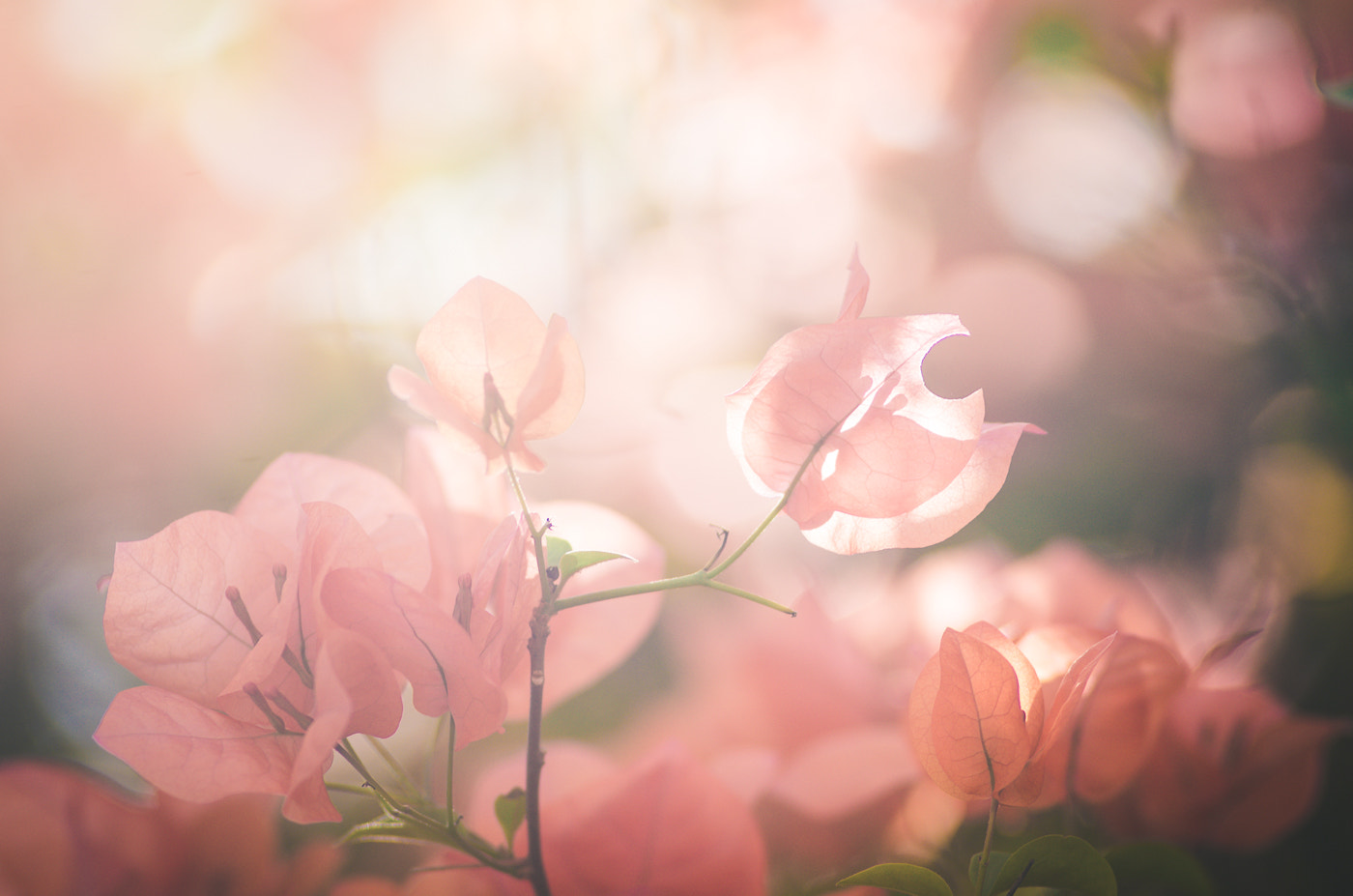 Photograph Paper flower by Peerasith Chaisanit on 500px