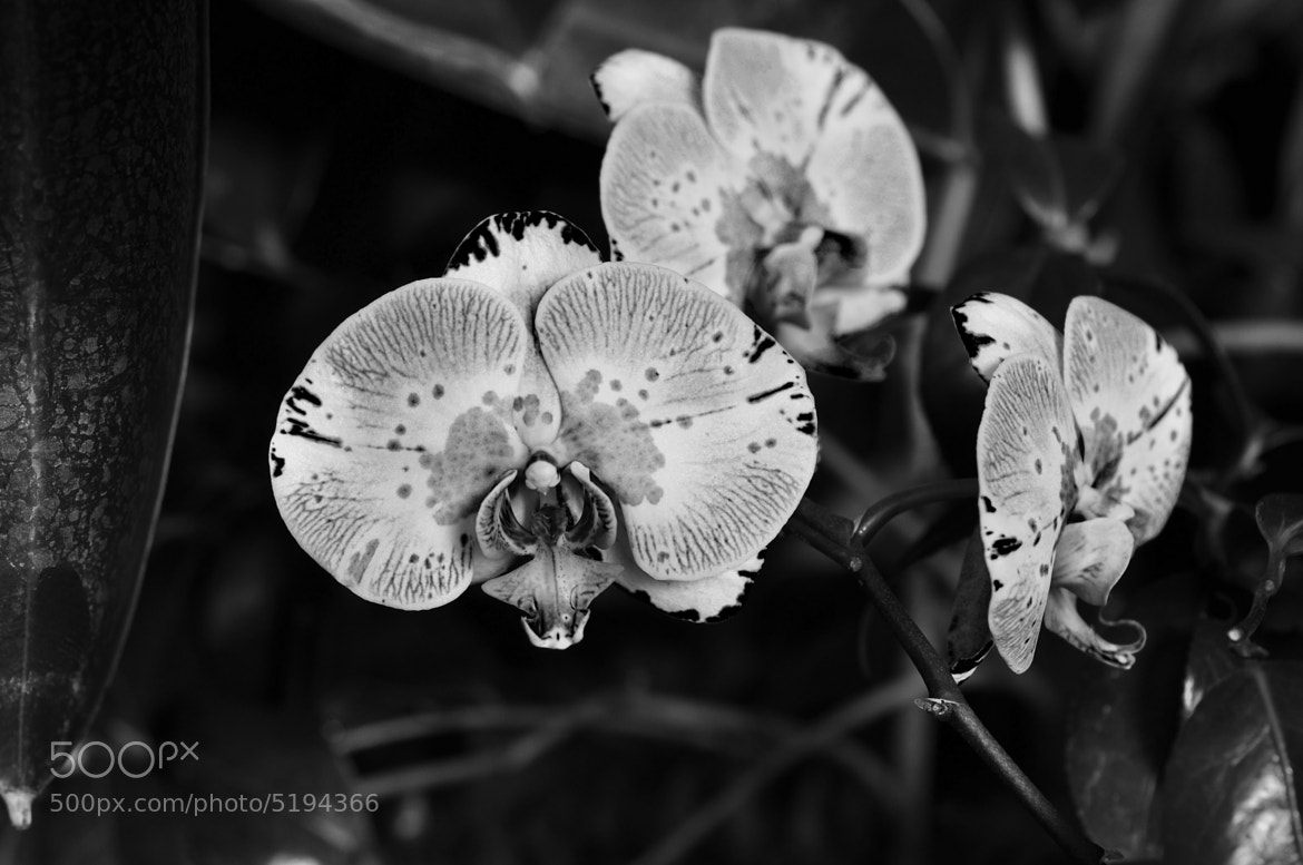 Photograph Orchids in Black and White by Matt Diley on 500px