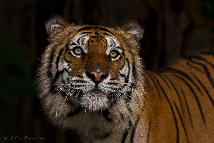 Photograph In Another World by Ashley Vincent on 500px