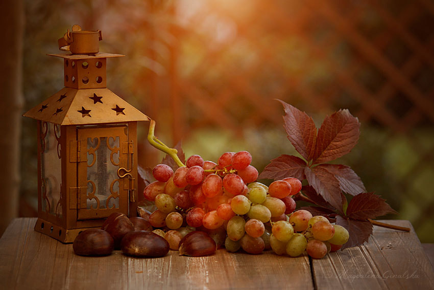 Photograph I Heard Through the Grapevine by Magdalena Ginalska on 500px