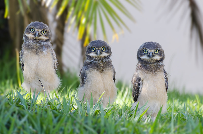 Photograph baby owls by Enzo Davide on 500px