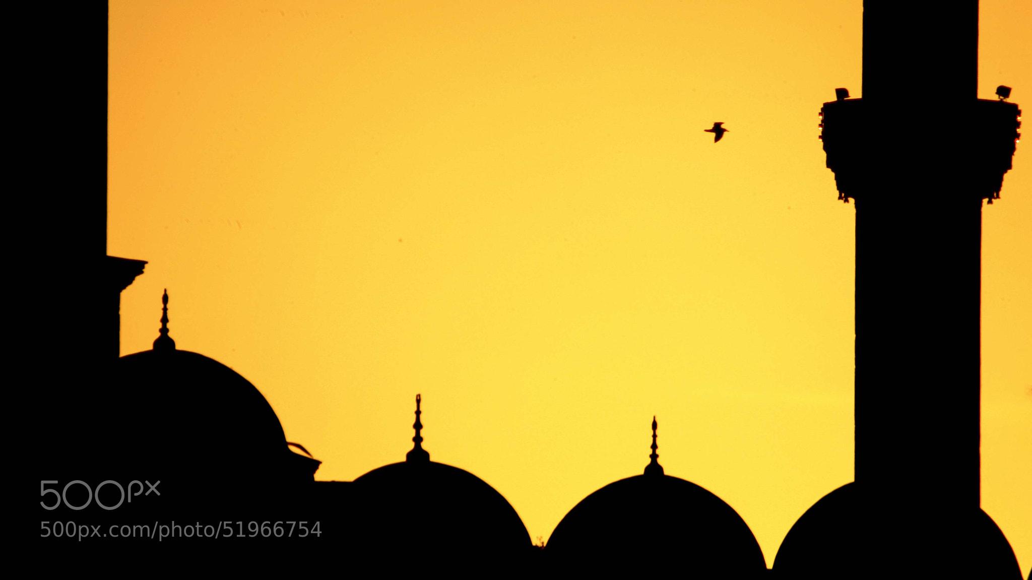 Photograph Suleymaniye Mosque by Uzeyir Destan on 500px