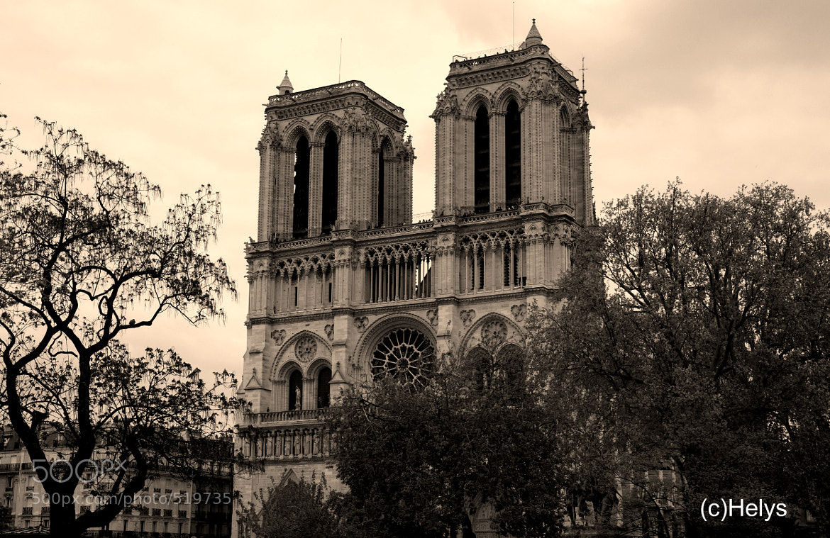 Photograph Notre Dame de Paris by Helys OlgaH on 500px