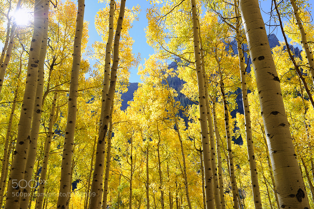 Photograph Fall Aspens by Nasim Mansurov on 500px