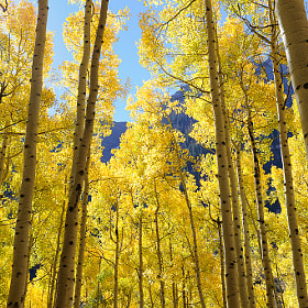 Fall Aspens by Nasim Mansurov (MegaZ)) on 500px.com