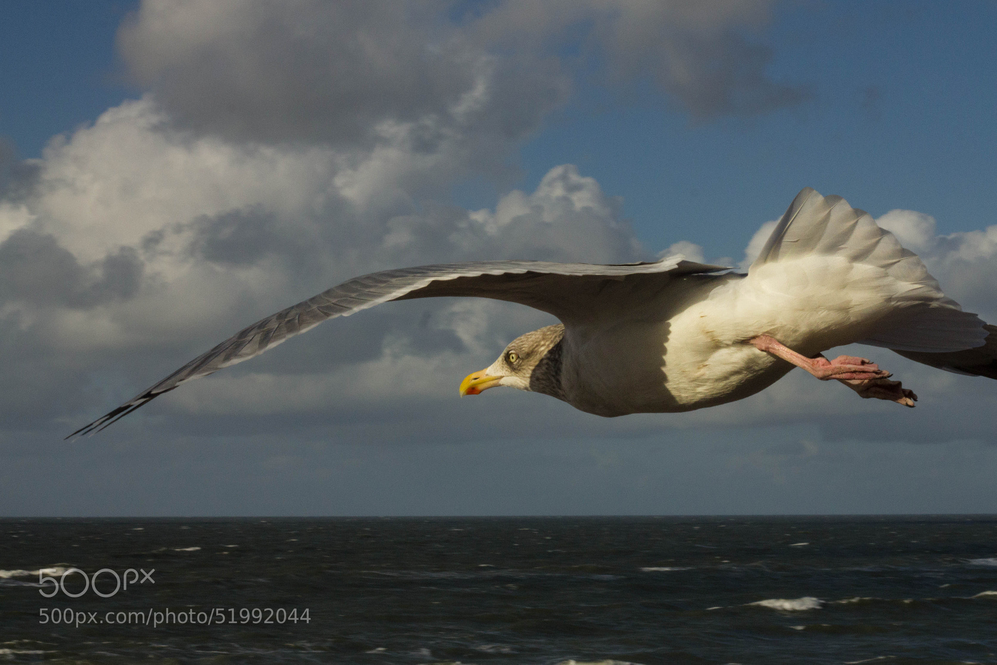 Photograph Seagull 3 by Heike Kitzig on 500px