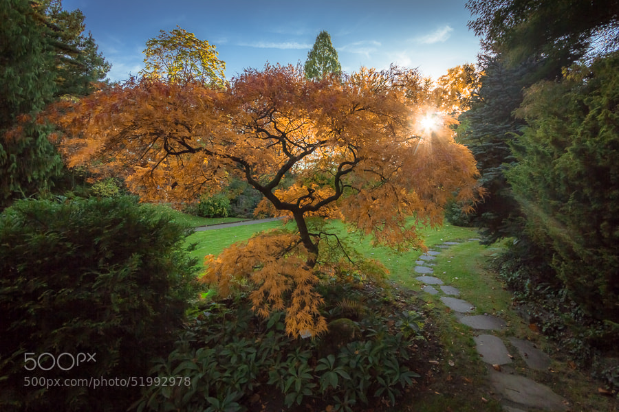 Photograph Tree in flames by Jens Sieckmann on 500px