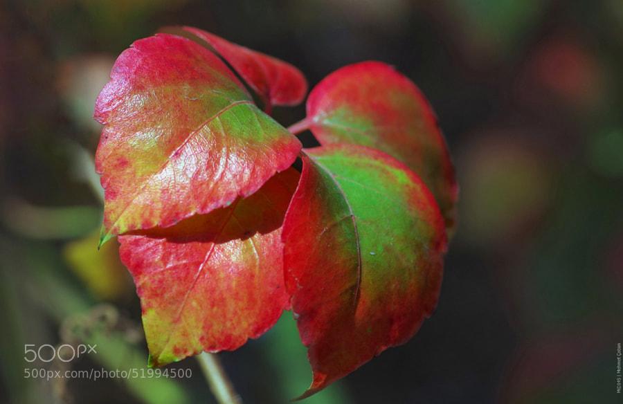 "Fall colors by Mehmet Çoban on 500px.com"" border=""0"" style=""margin: 0 0 5px 0;"