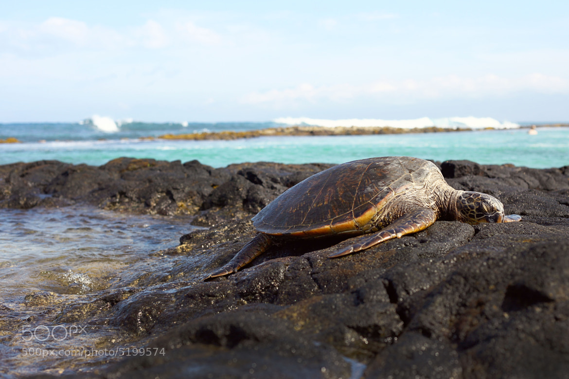 Photograph Turtle by Timothy Jackson on 500px