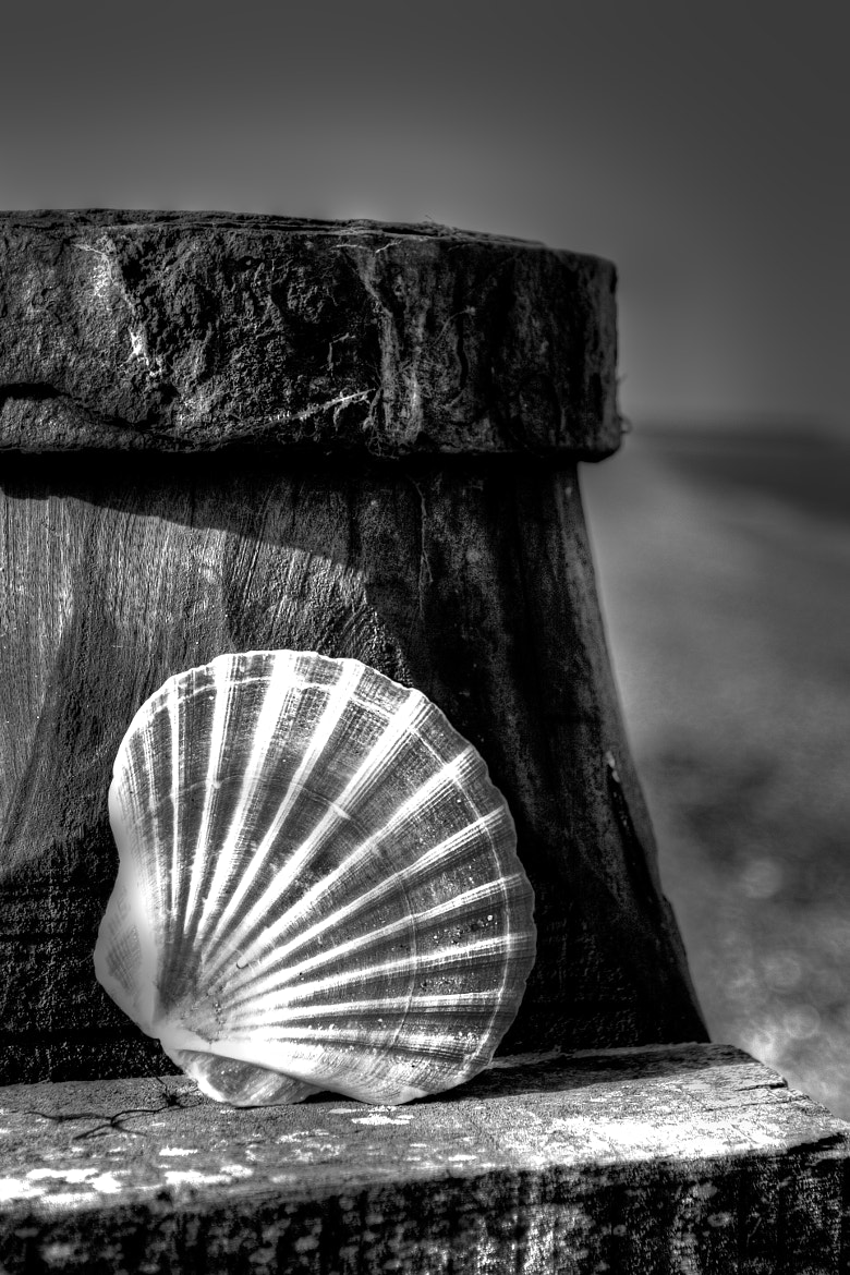 Photograph Shell at whitstable by Dean Bedding on 500px