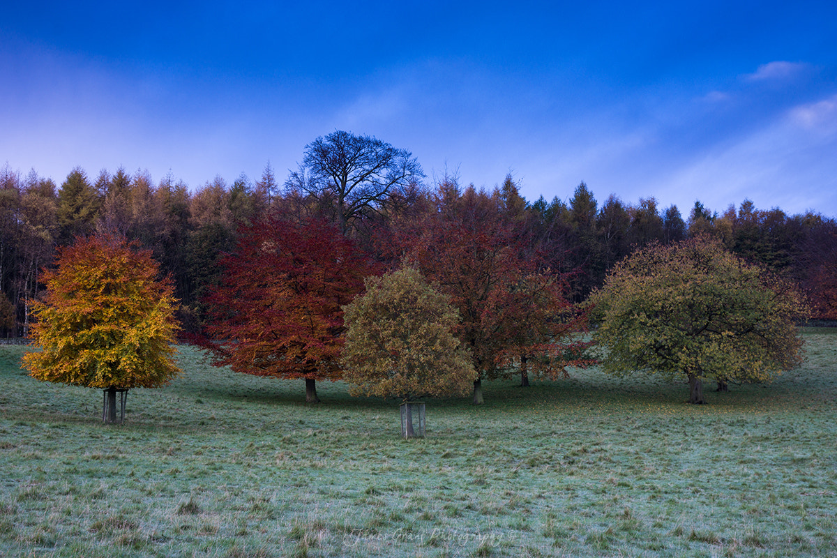 Photograph Chatsworth House Autumn Trees by James Grant on 500px