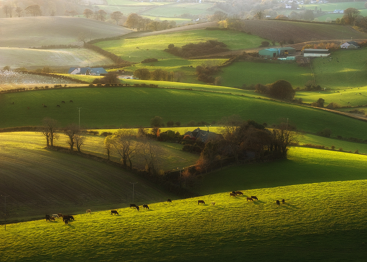 Photograph Cows and birds by Lukasz Maksymiuk on 500px