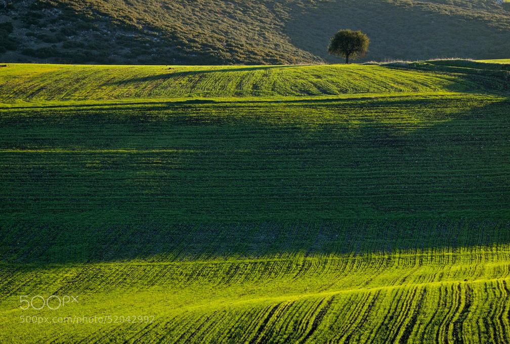 Photograph lone tree by Nikos Metaxiotis on 500px